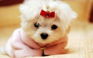 Puppy Adoption Singapore SingaporePuppyAdoption