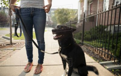 How I Stopped My Dog From Pulling on the Leash